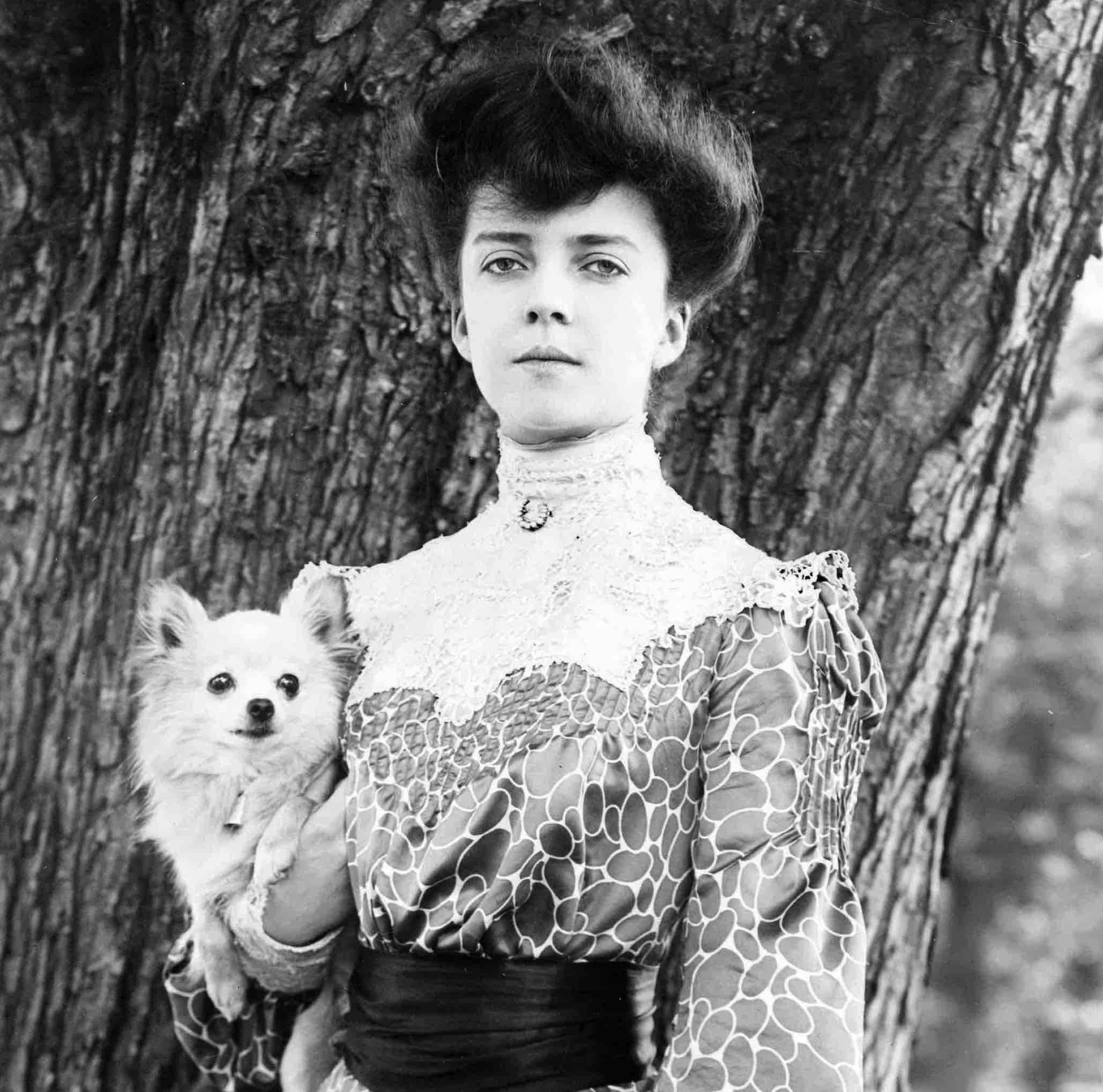 Alice Roosevelt Pekingese History Hustle