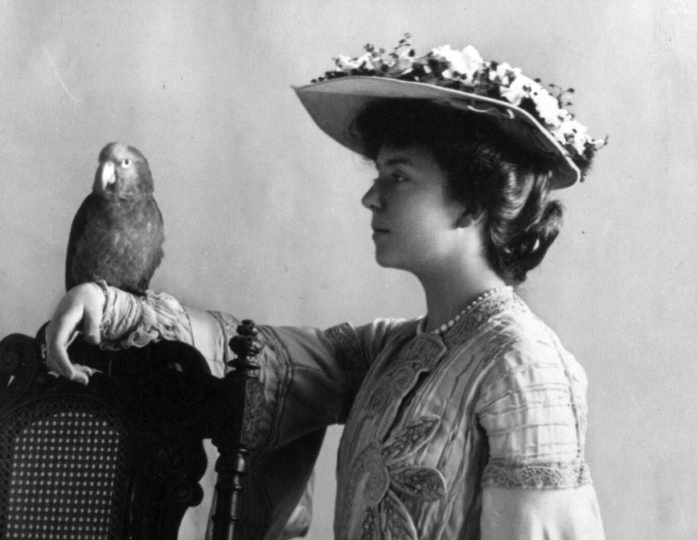 Alice Roosevelt parrot History Hustle