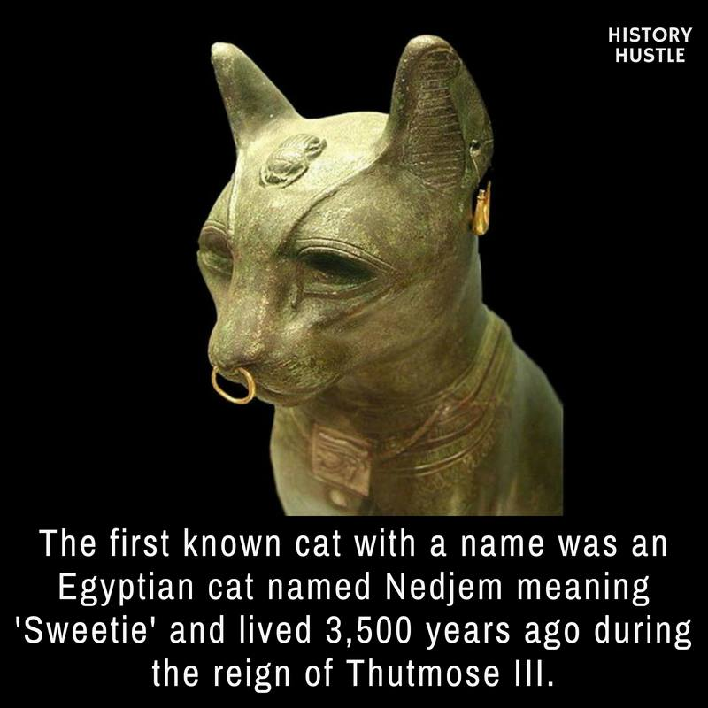 Egyptian cat History Hustle fact