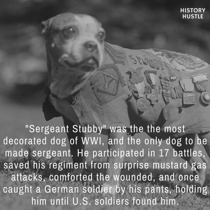 Sgt stubby fact History Hustle