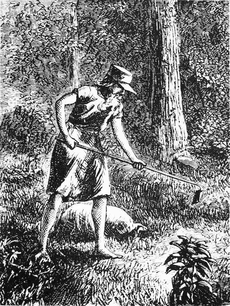Johnny Appleseed History Hustle Stephanie Weber 2 image