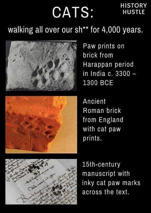 history-hustle-cats-meme-image